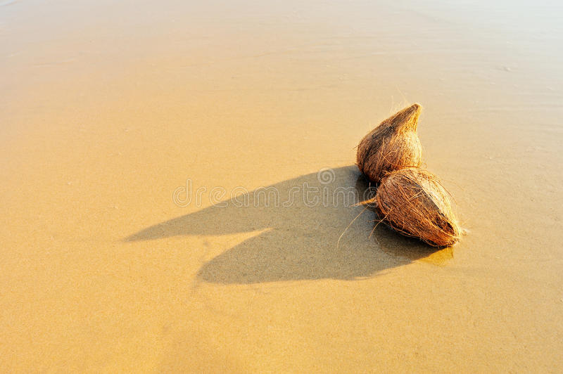Tropical Coconuts Royalty Free Stock Photography