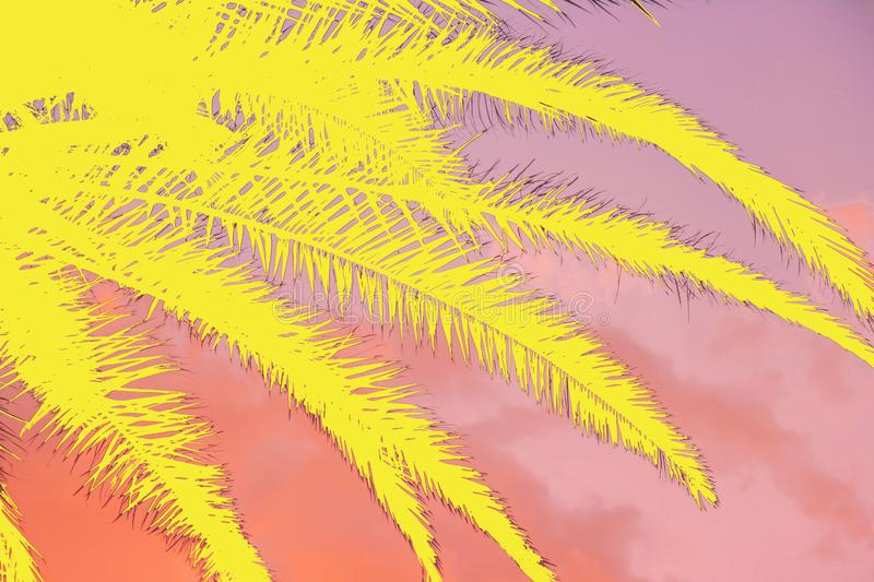 Tropical collage of sunset and palm leaves vivid background royalty free stock images