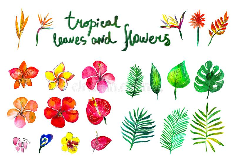 Tropical collection with exotic flowers and leaves isolated elements on the white background. vector illustration