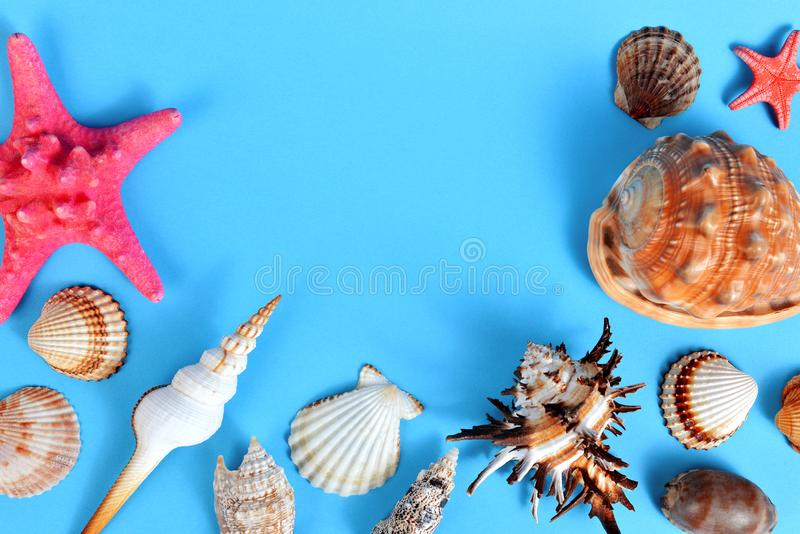 Tropical conch shells with starfish. Tropical conch shells with starfish isolated on blue background. Sea life stock photography