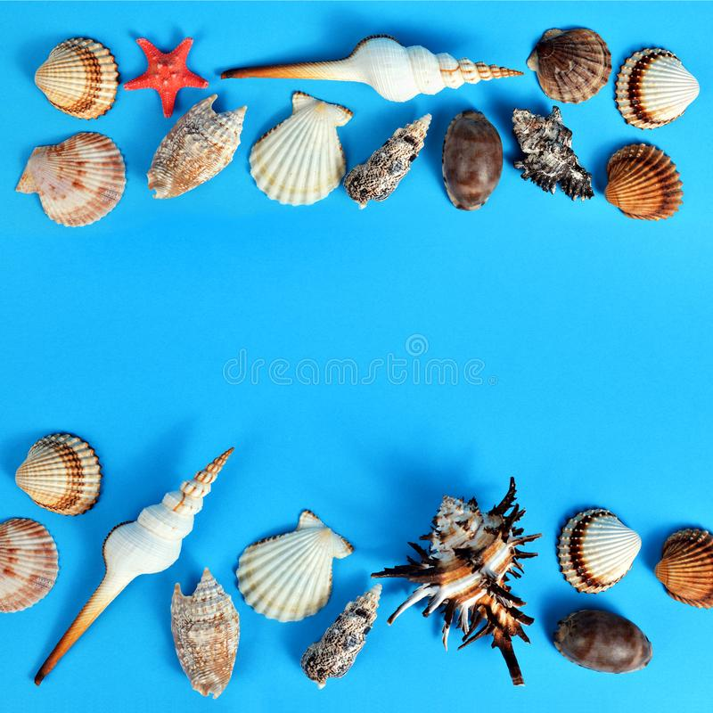 Tropical conch shells with starfish. Tropical conch shells with starfish isolated on blue background. Sea life royalty free stock image
