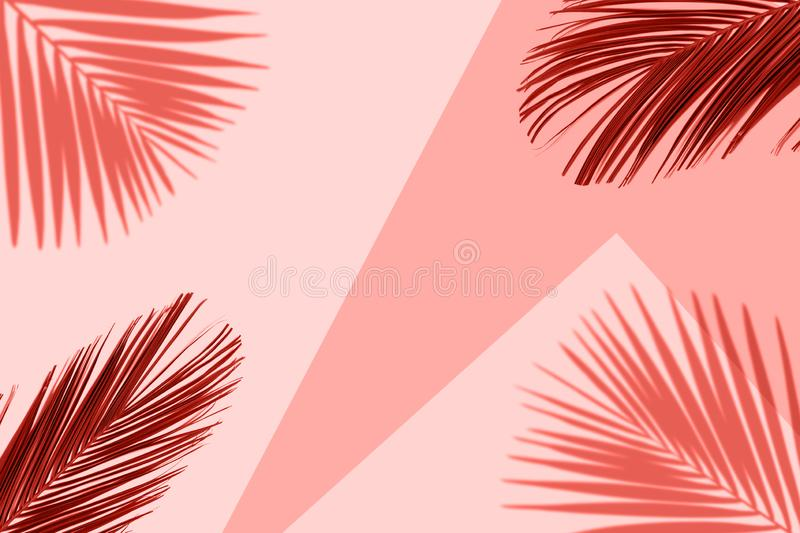 Tropical coral color background with exotic tropical palm leaves. Minimal summer concept. royalty free illustration