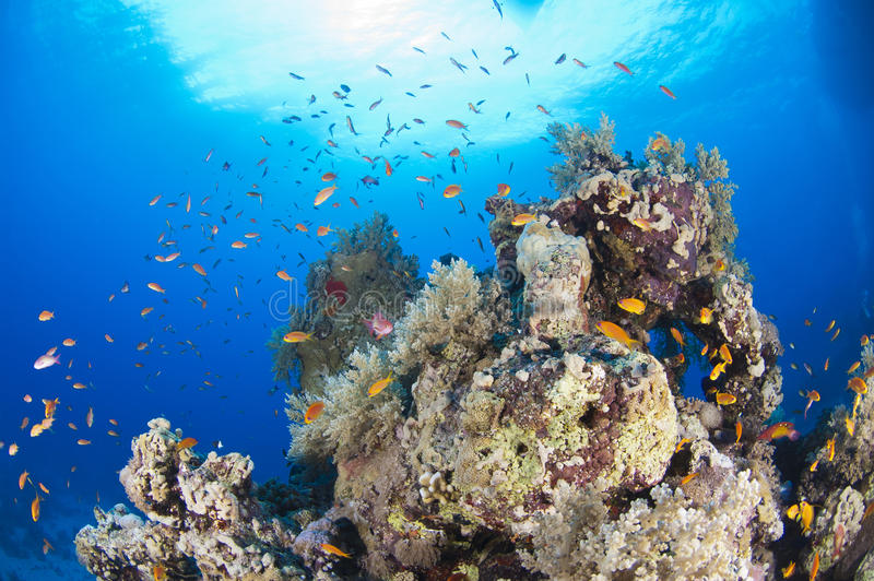 Tropical Coral Reef Scene Stock Image