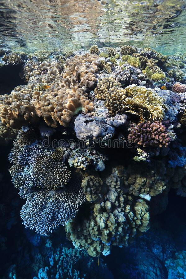 Tropical coral reef. Underwater in the Red Sea stock photography