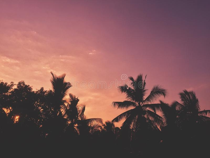 Purple sunsets. Tropical country perfect sunsets royalty free stock photos