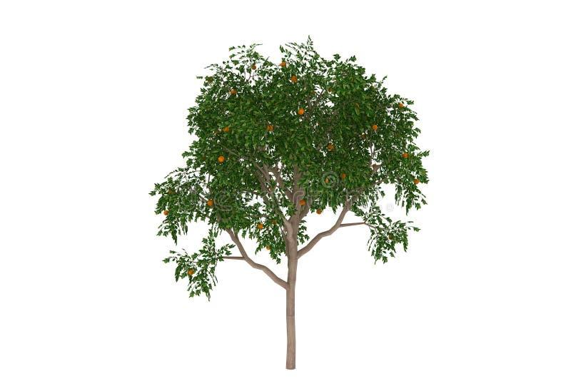 Tropical da árvore alaranjada isolado ilustração stock