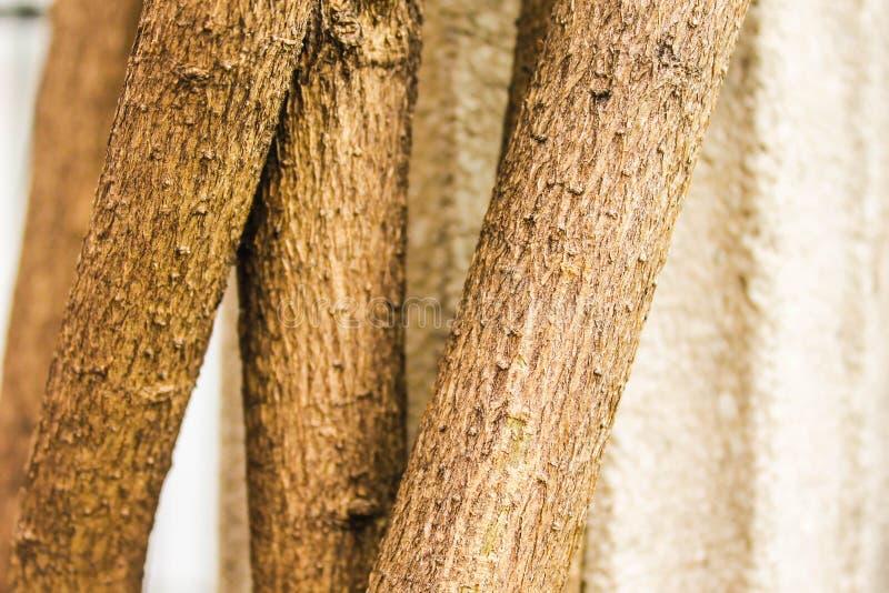 Tropical de la ecología de madera de madera de la planta del tronco solo foto de archivo