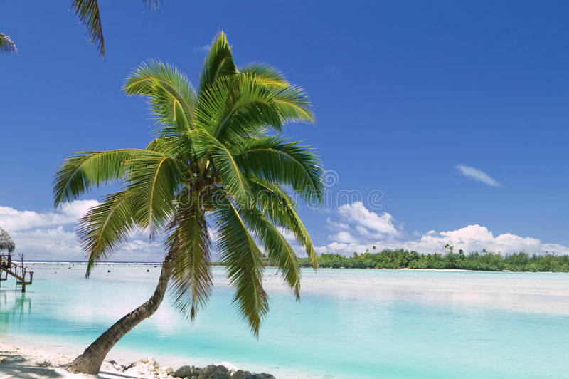 Download Tropical Dream Beach Paradise Stock Image - Image: 6328873