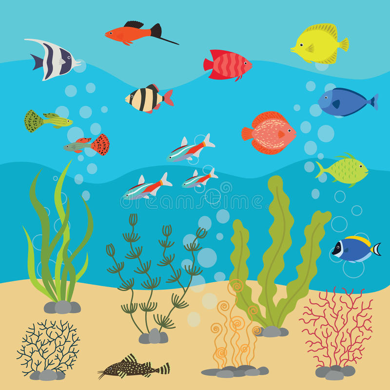 Tropical exotic fishes in aquarium or ocean underwater. Vector illustration of fish tank with colorful sea fishes royalty free illustration