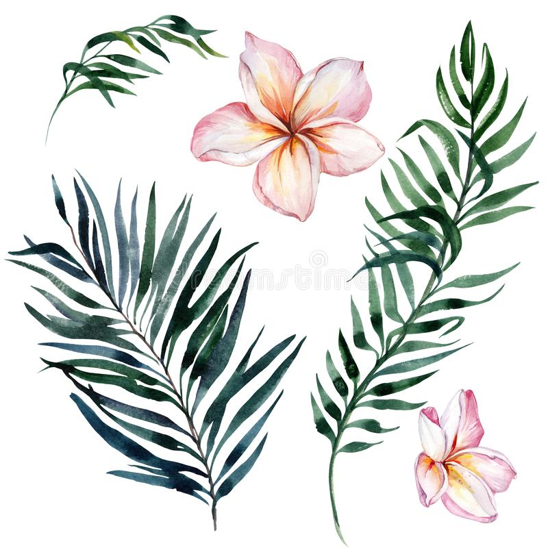 Tropical exotic floral set. Beautiful pink plumeria flowers and green palm leaves isolated on white background. Watercolor painting. Hand drawn and painted vector illustration