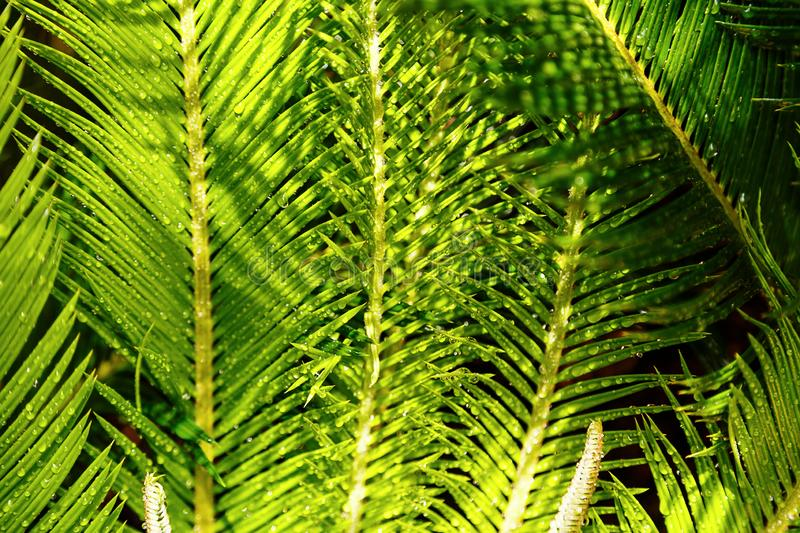 Tropical exsotic green palm leaves, close up stock photos