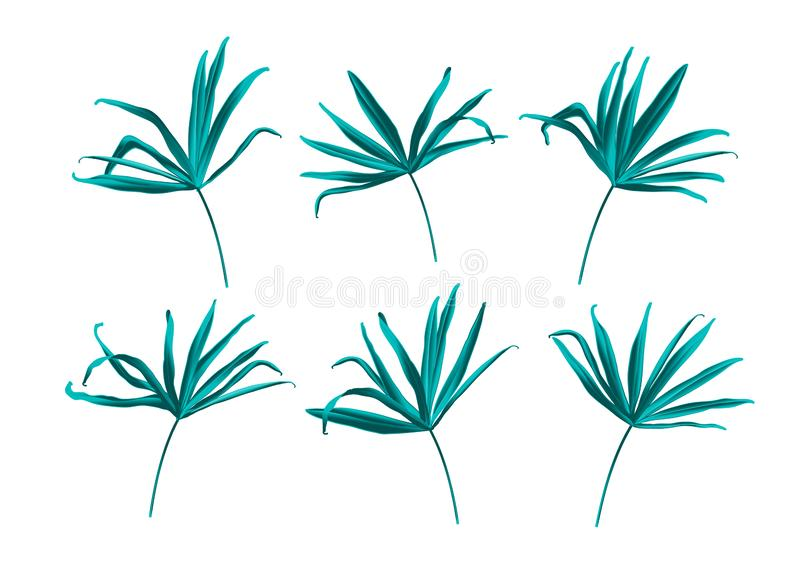 Tropical fan palm green jungle leaf isolated on white background. Botanical elegant decorative floral vector illustration in trendy realistic cartoon style stock illustration