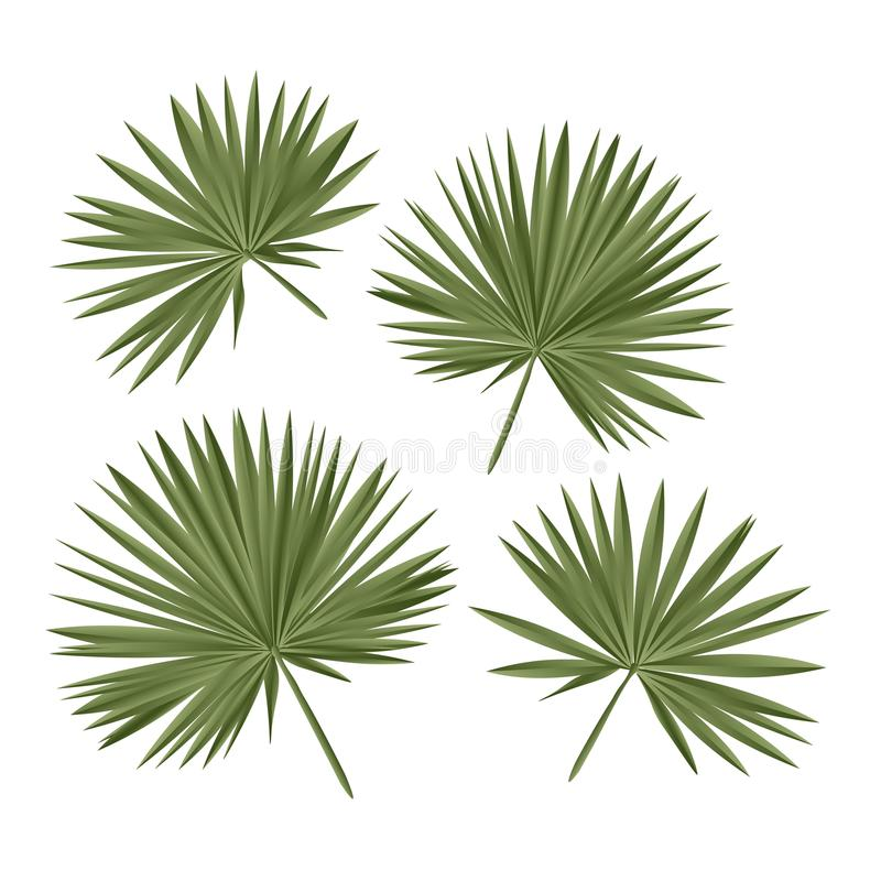 Free Tropical Fan Palm Leaves. Vector Isolated Stock Photos - 118549173