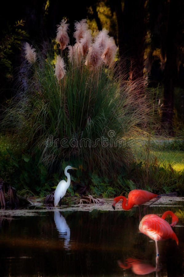 Tropical Fantasy Bird Swamp stock image
