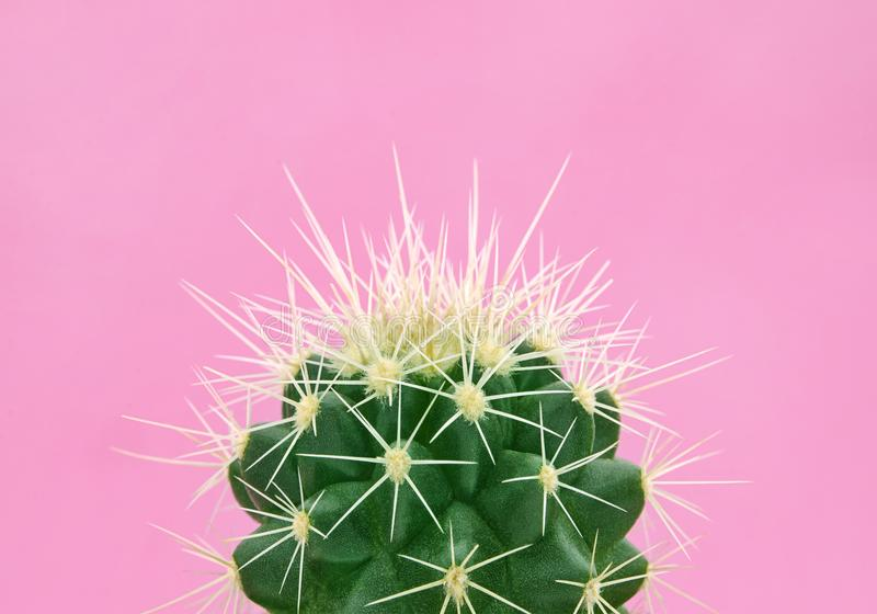 Tropical fashion cactus on pink paper background. Trendy minimal pop art style and colors. stock image