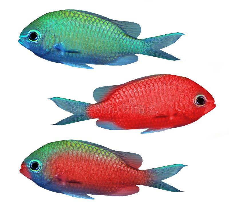 Download Tropical fish stock photo. Image of nature, deep, marine - 10195290