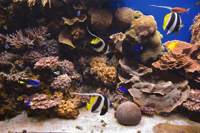 Download Tropical Fish stock image. Image of underwater, water - 1056735