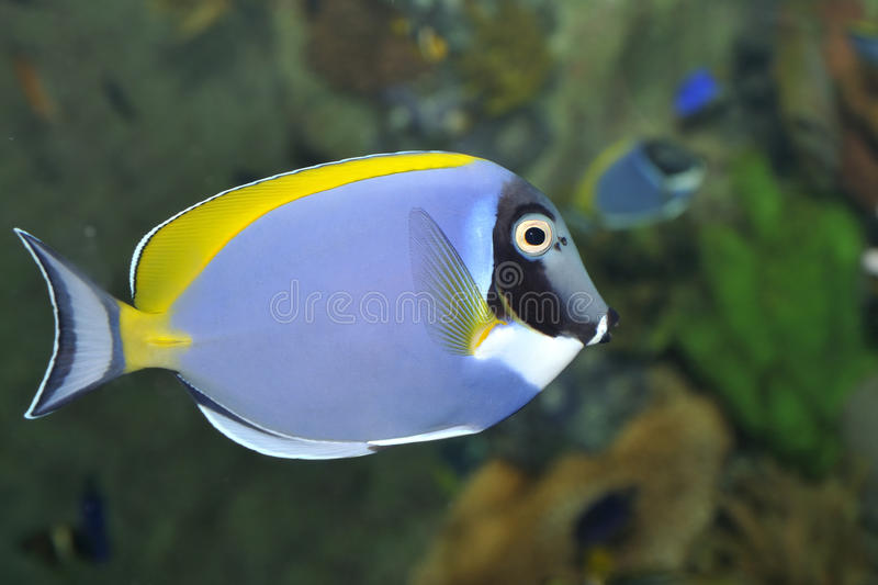Download Tropical Fish Stock Photo - Image: 13178670