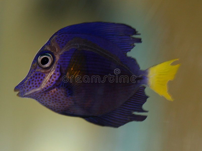 Download Tropical fish stock photo. Image of oceans, water, wildlife - 1421036