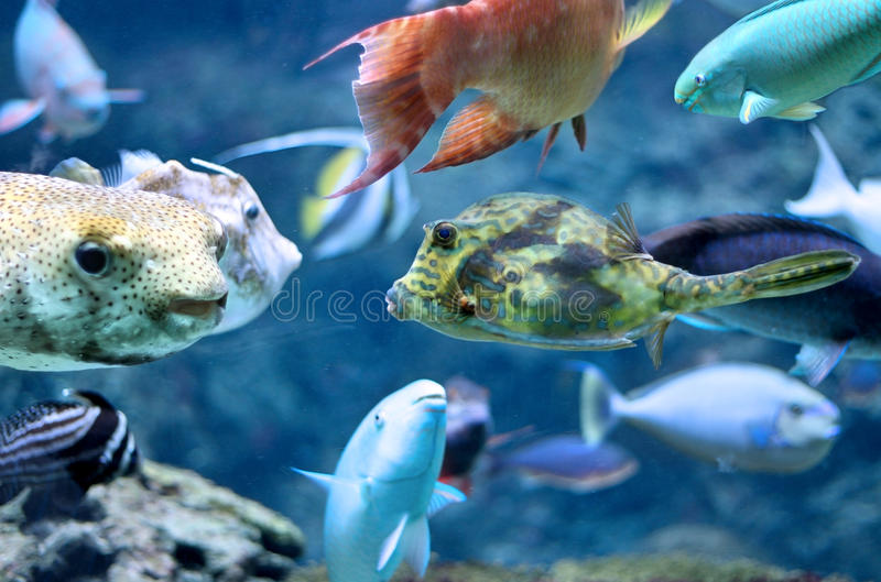 Download Tropical Fish stock photo. Image of diving, exotic, parrotfish - 15595742