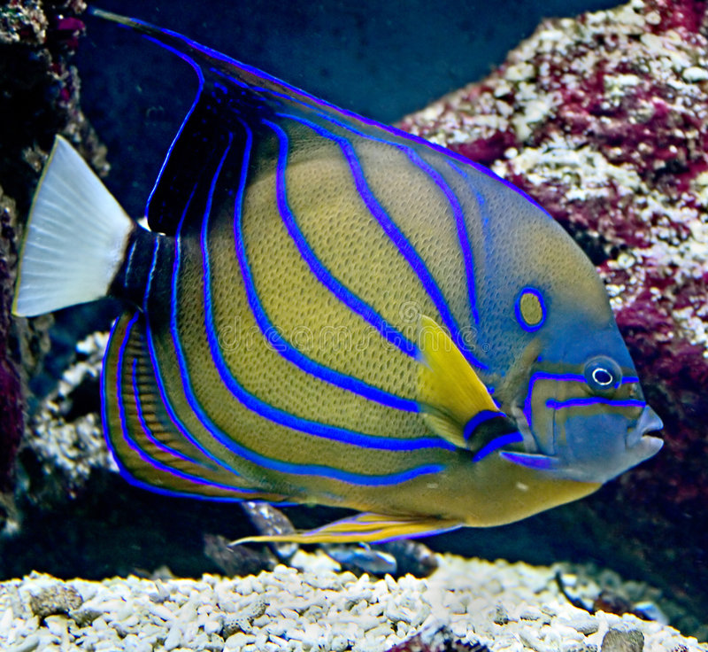 Tropical fish 23 stock photo