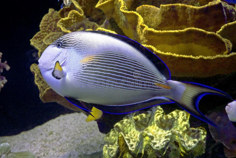 Download Tropical fish 31 stock photo. Image of ocean, blue, life - 17481778