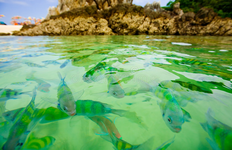 Tropical fish. Colorful tropical fish in ocean near beach in Thailand