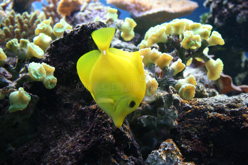 Download Tropical Fish Royalty Free Stock Photos - Image: 5475888