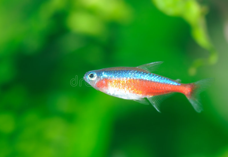 Download Tropical fish stock photo. Image of saltwater, striped - 9227808