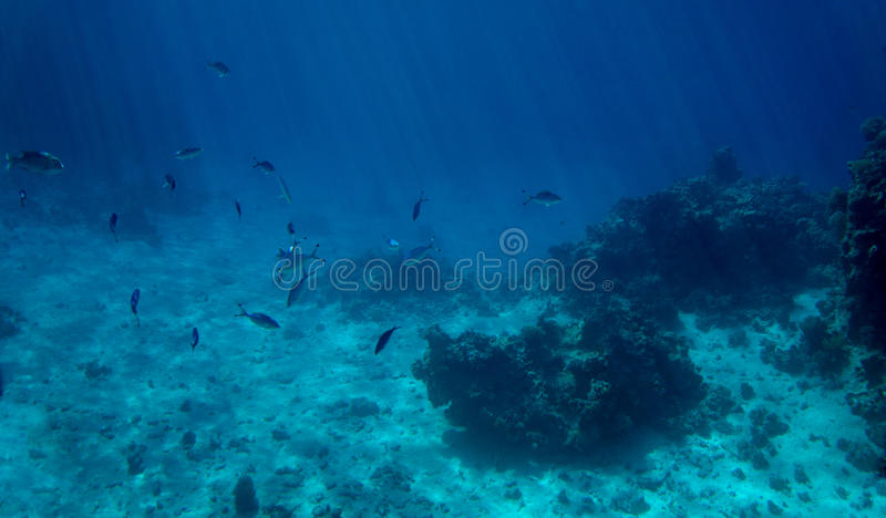 Tropical fish and coral stock image