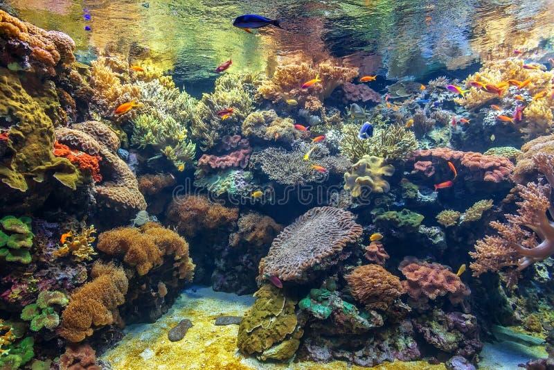Tropical fish in a coral aquarium. stock image