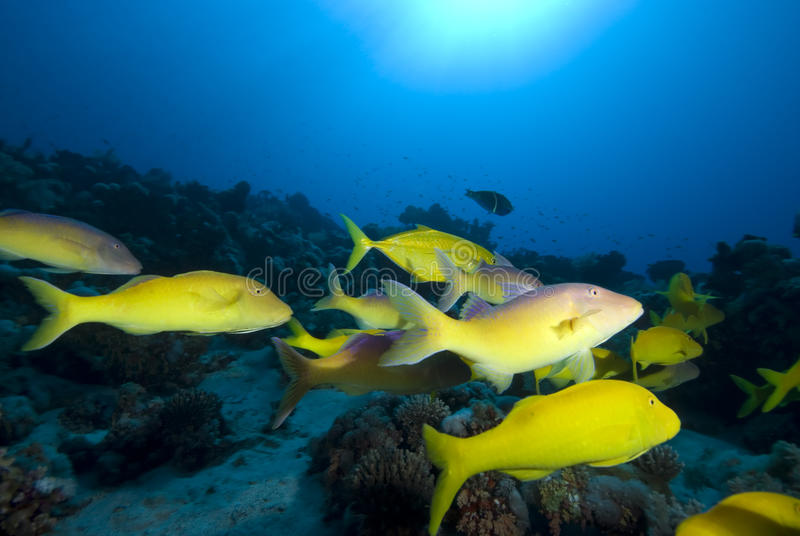 Download Tropical Fish And Coral Reef Stock Image - Image: 12734983