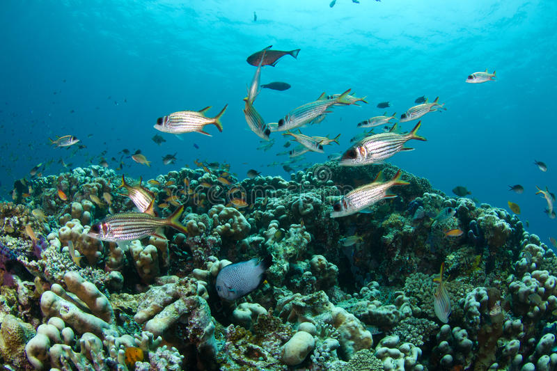 Download Tropical Fish And Coral Reef Stock Photo - Image of marine, water: 21983086