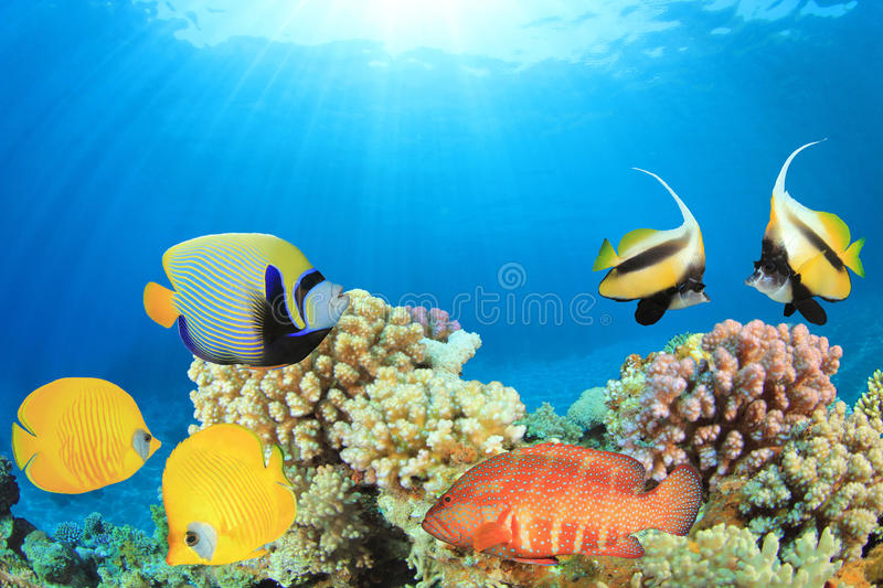 Download Tropical Fish And Coral Reef Stock Image - Image: 25267869