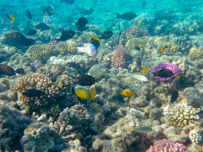 Download Tropical Fish And Coral Reef In Sunlight Royalty Free Stock Photos - Image: 22756768