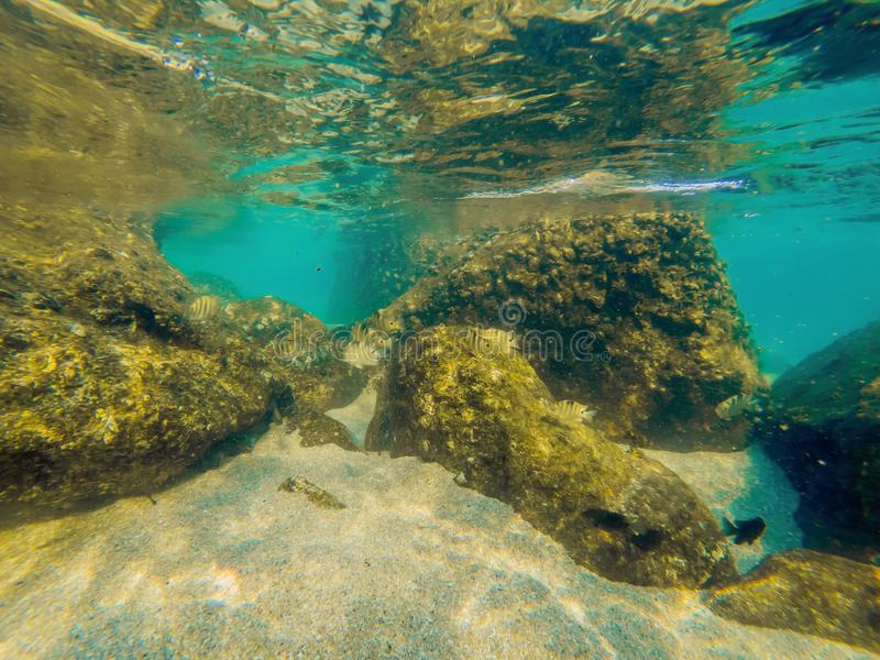 Tropical fish and corals in the sea under water royalty free stock photography