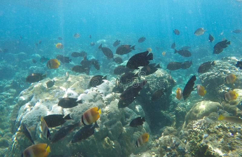 Group of fish swimming on rock and coral reef. royalty free stock photography
