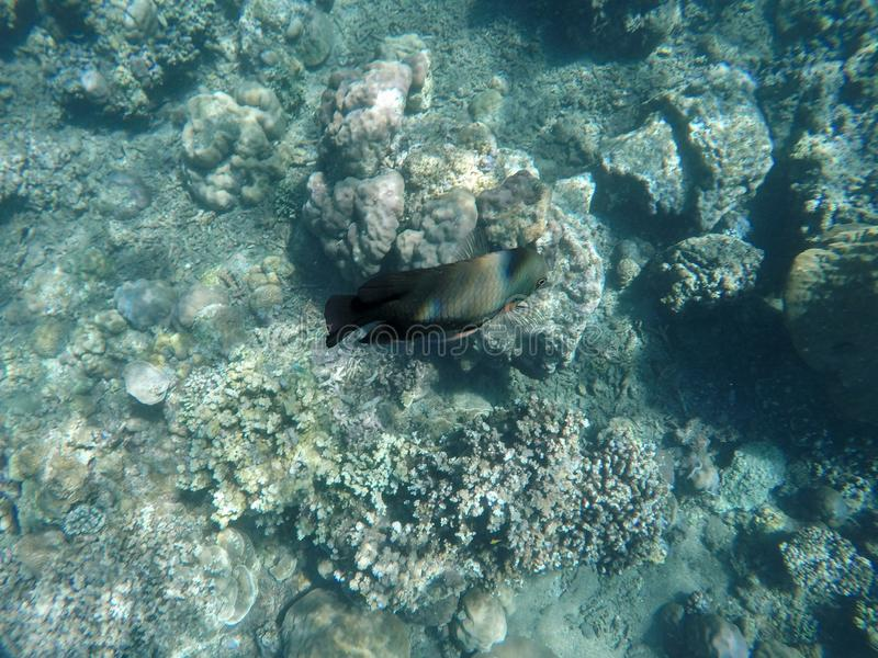 Underwater view of coral reefs and colorful fish. royalty free stock image