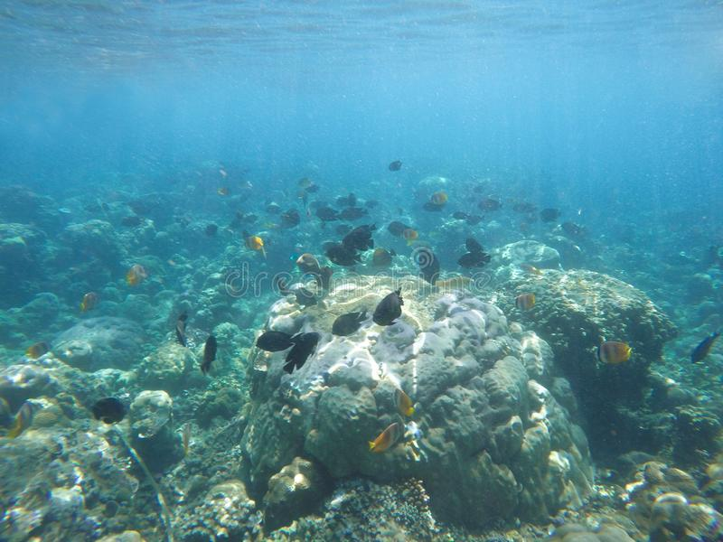 Underwater scene of fish, rock and coral reefs. royalty free stock photo