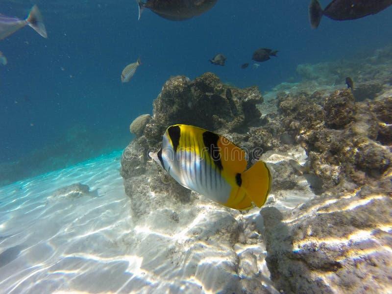 Tropical fish in ocean stock photos