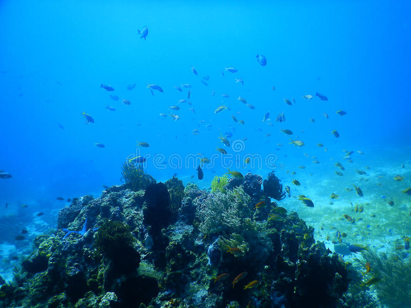 Tropical fish over coral reef stock photos