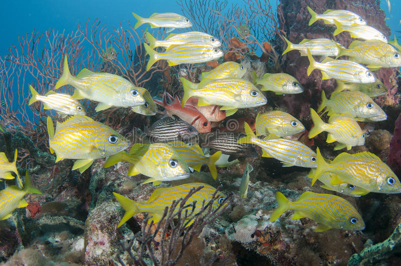 Tropical fish on a reef