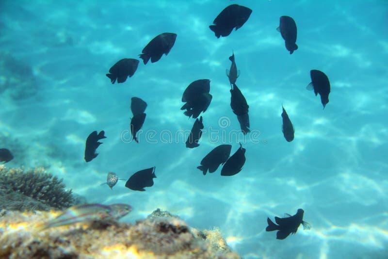Download Tropical Fish Swim Among Coral Stock Image - Image: 17287957