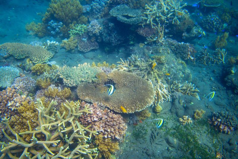 Tropical fish and table coral. Exotic island sea shore. Tropical seashore landscape underwater photo. stock images