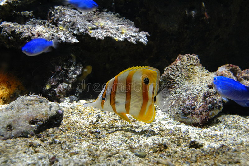 Tropical fish in the zoo royalty free stock photography