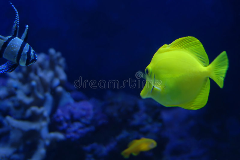 Download Tropical fishes stock image. Image of animal, swim, tropical - 1412477