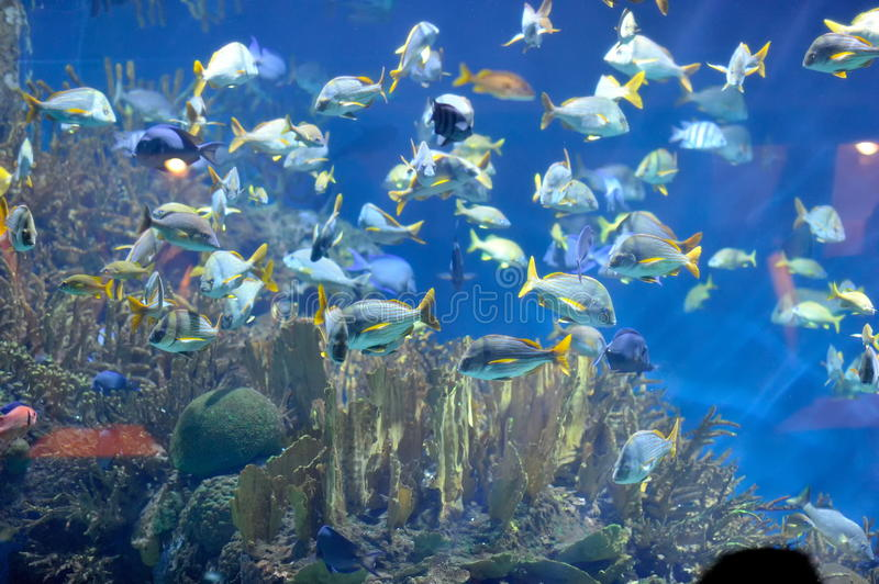 Download Tropical fishes stock photo. Image of image, dive, submerged - 20937884