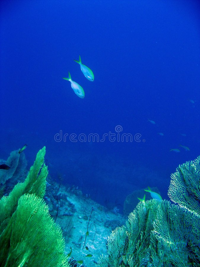 Tropical fishes royalty free stock photography
