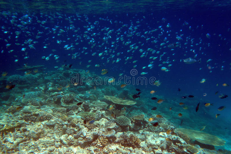 Download Tropical Fishes In Coral Reef Royalty Free Stock Photography - Image: 20292687