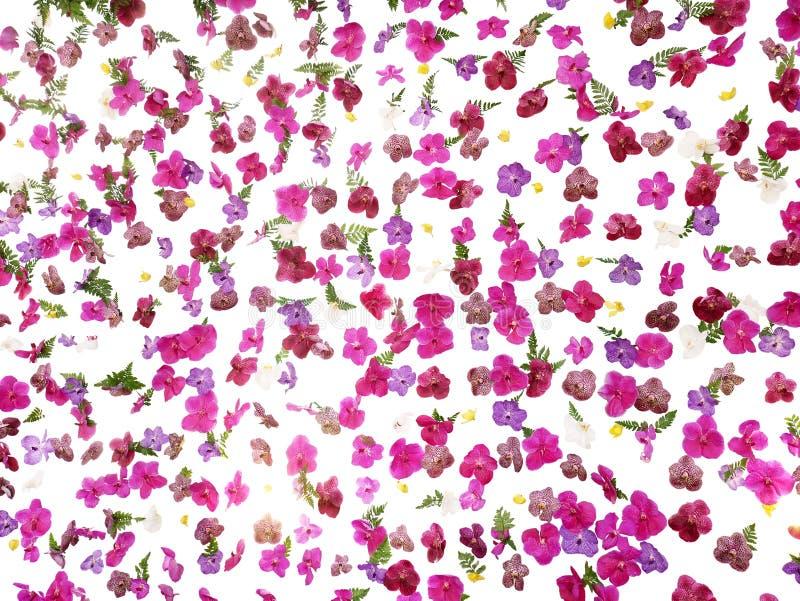 Tropical floral pattern wedding backdrop, beautiful vanda orchid stock image